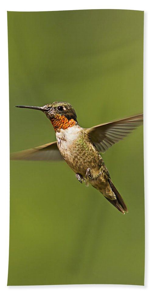 Ruby Throated Hummingbird Bath Sheet featuring the photograph Ruby Throated Hummingbird In Flight by John Vose