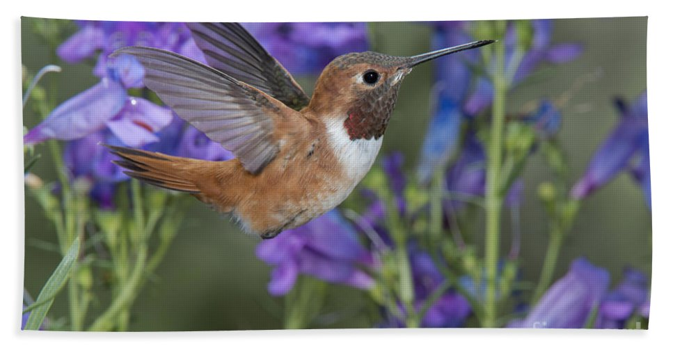 Rufous Hummingbird Hand Towel featuring the photograph Rufous Hummingbird by Anthony Mercieca