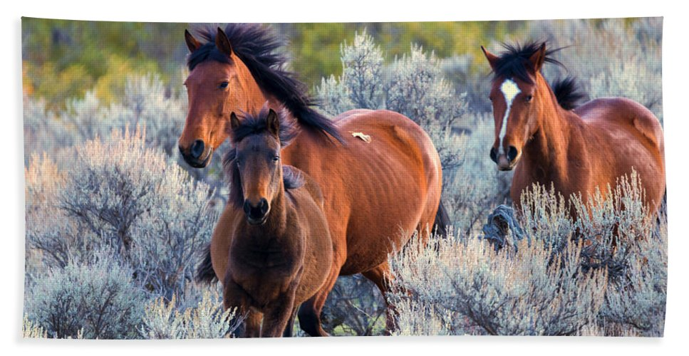 Wild Horses Hand Towel featuring the photograph Running Free by Mike Dawson