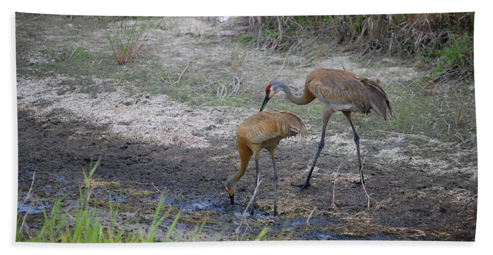 Feeding Hand Towel featuring the photograph Sandhill Crane by Robert Floyd
