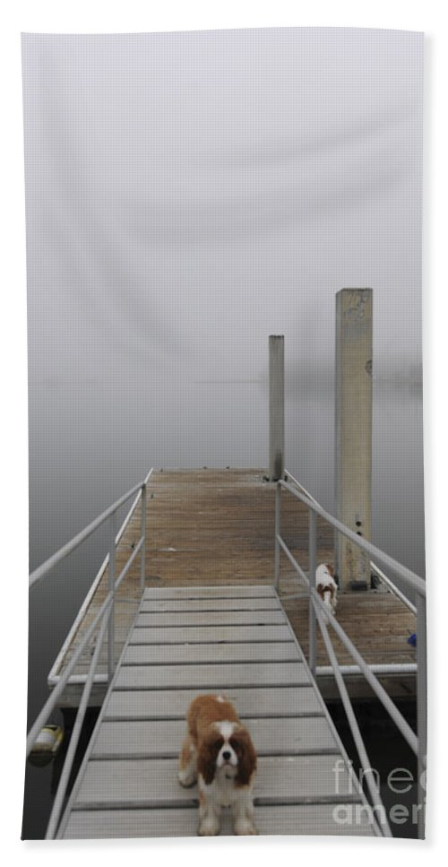 Fog Hand Towel featuring the photograph Sea Dog by Dale Powell