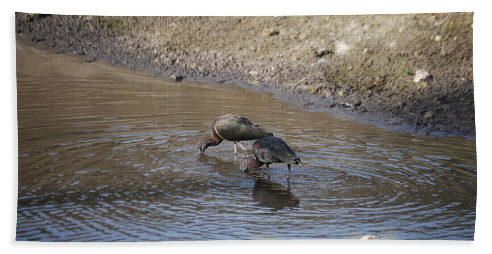 Feeding Together Hand Towel featuring the photograph Shorebirds by Robert Floyd
