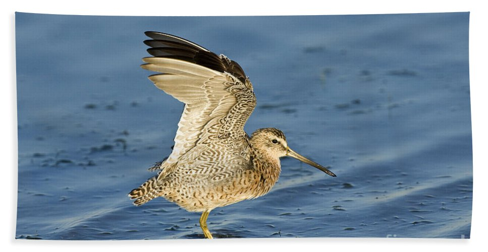 Animal Hand Towel featuring the photograph Short-billed Dowitcher by Anthony Mercieca