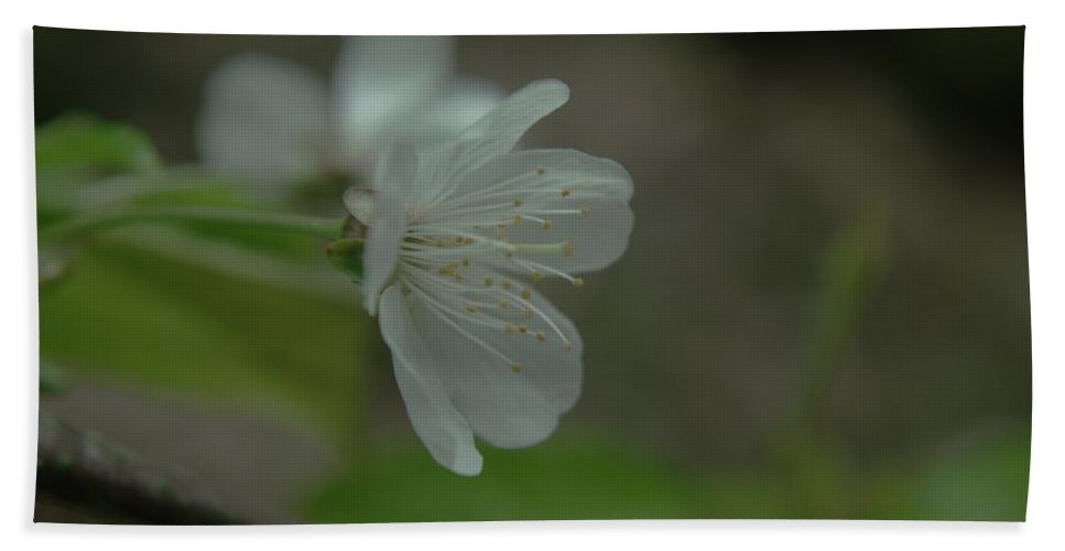 Flowers Hand Towel featuring the photograph Side View Of A Blossom by Jeff Swan