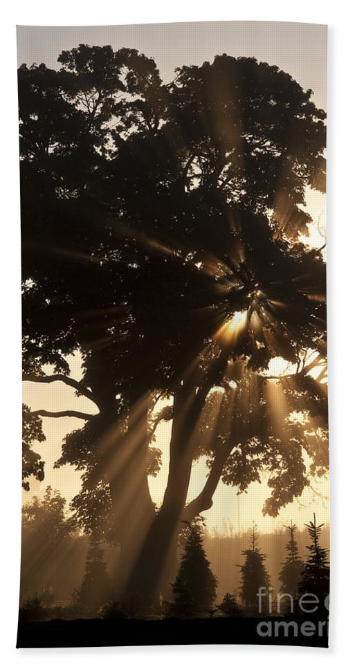 Beautiful Bath Sheet featuring the photograph Silhouetted Tree With Sun Rays by Jim Corwin