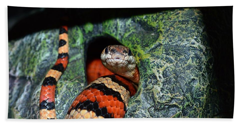 Snake Hand Towel featuring the photograph Snake by FL collection