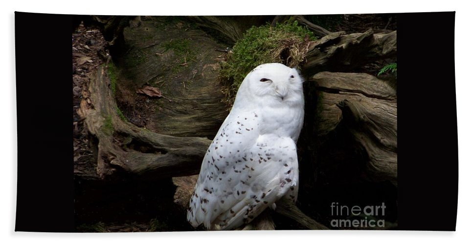 Owls Bath Sheet featuring the photograph Snowy Owl by Charles Robinson