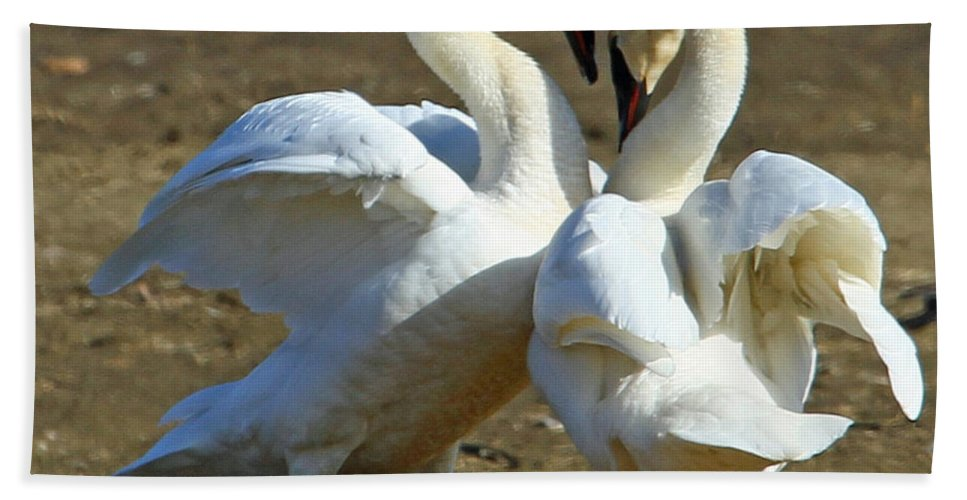 Swan Hand Towel featuring the photograph Spring Dance by Dee Carpenter