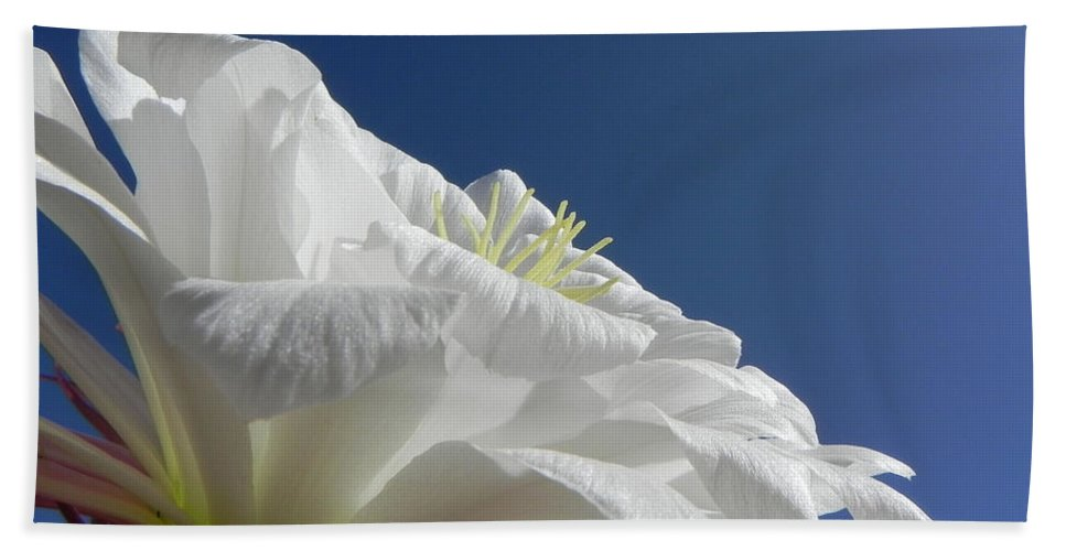 Flower Bath Sheet featuring the photograph Striking Contrast by Deb Halloran