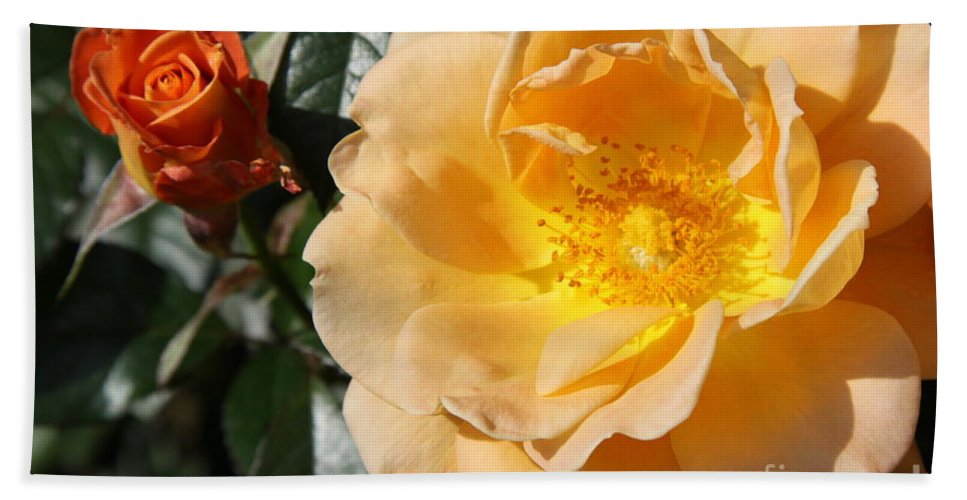 Rose Hand Towel featuring the photograph Summer's Rose Love by Christiane Schulze Art And Photography