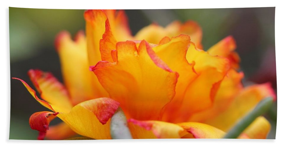 Mccombie Bath Sheet featuring the photograph Sundial Portulaca by J McCombie