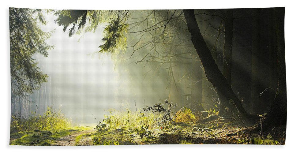Sunlit Path Hand Towel featuring the photograph Sunlit Path by Ingrid Smith-Johnsen