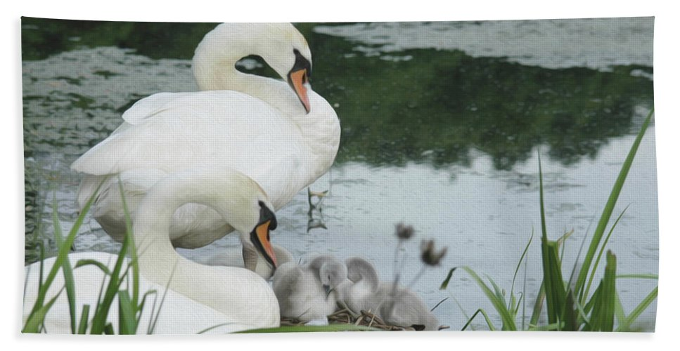 Swan Hand Towel featuring the photograph Swan Family by Tracy Winter