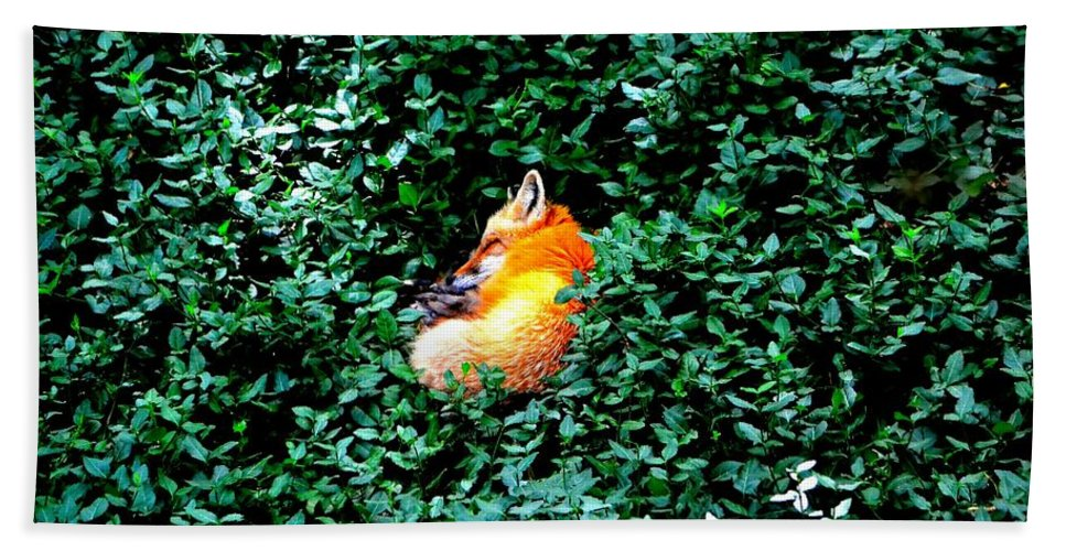 Fox Hand Towel featuring the photograph Sweet Slumber by Deena Stoddard