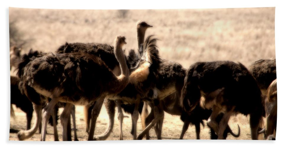 Ostrich Hand Towel featuring the photograph The Gathering Place by Douglas Barnard