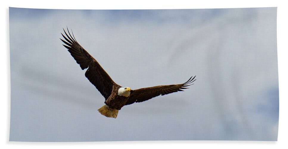 Bald Eagle Photograph Bath Sheet featuring the photograph The Silent Hunter by Jim Garrison