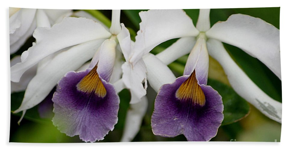 Orchids Hand Towel featuring the photograph Up Close And Personal by Living Color Photography Lorraine Lynch
