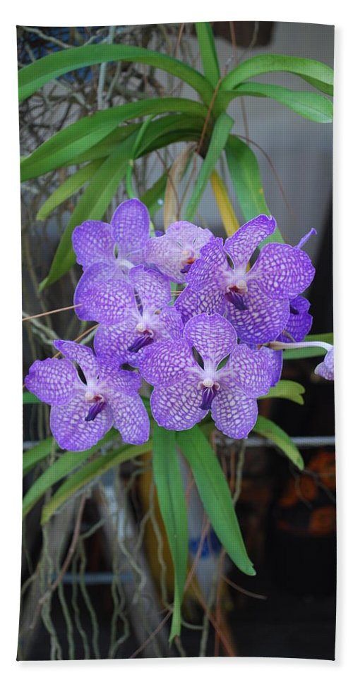 Grown At My Home Bath Sheet featuring the photograph Vanda Orchid by Robert Floyd