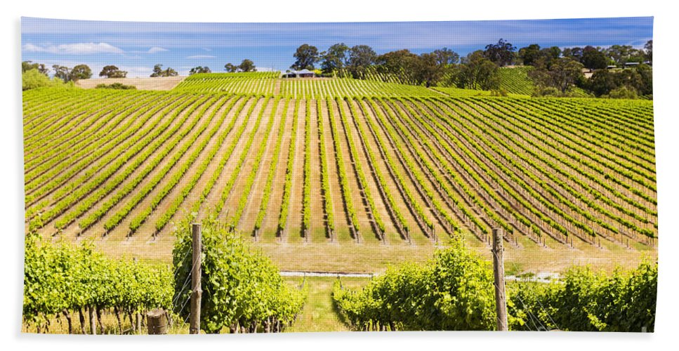 Wine Hand Towel featuring the photograph Vineyard by Tim Hester