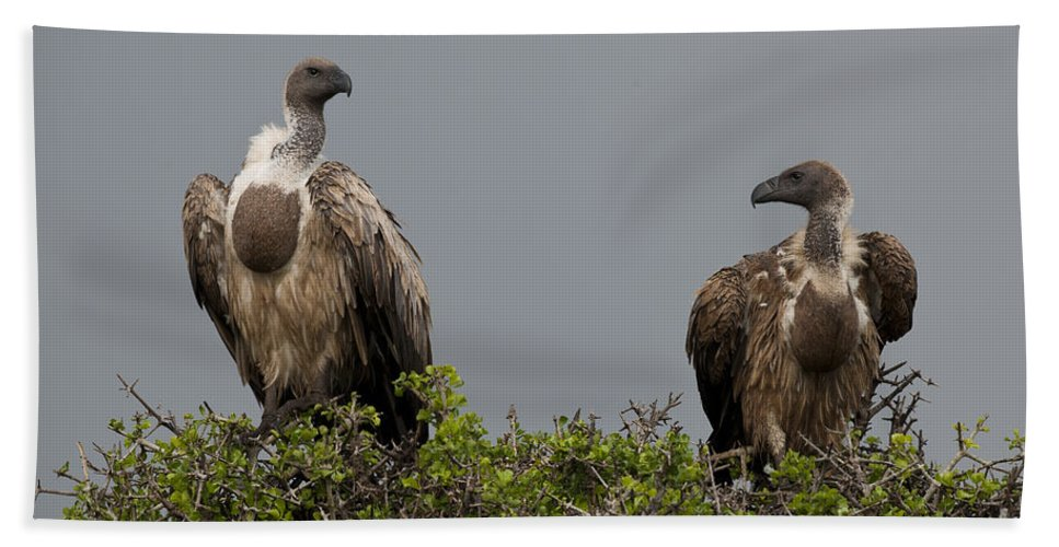African Fauna Bath Sheet featuring the photograph Vultures With Full Crops by John Shaw
