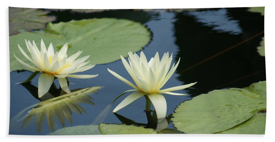 White Bath Sheet featuring the photograph 2 Waterlilys Rising Above The Water by Rob Luzier