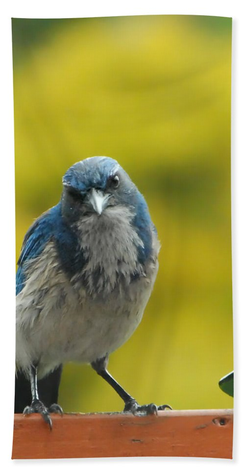Bird Hand Towel featuring the photograph What Did You Say by Donna Blackhall