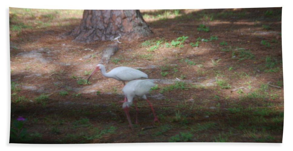 Suncoast Exterminators Hand Towel featuring the photograph White Ibis by Robert Floyd
