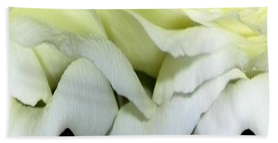 Roses Bath Sheet featuring the photograph White Rose Polar Coordinates by Rose Santuci-Sofranko