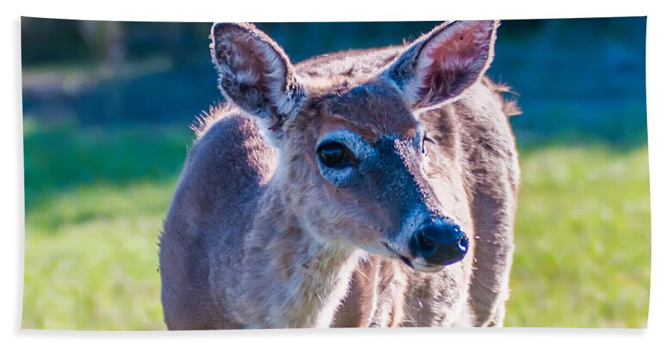White Bath Towel featuring the photograph White Tail Deer Bambi In The Wild by Alex Grichenko