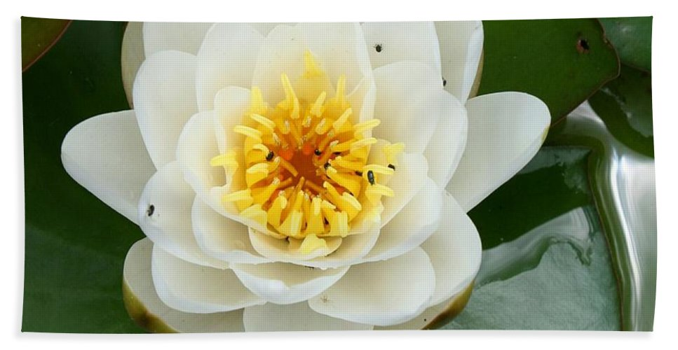 Waterlily Bath Sheet featuring the photograph White Waterlily by Christiane Schulze Art And Photography
