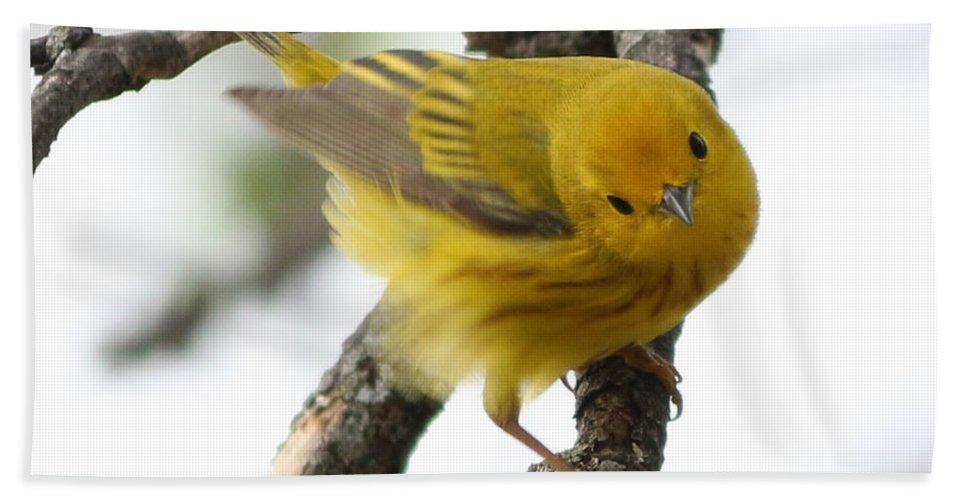 Yellow Warbler Bath Sheet featuring the photograph Yellow Warbler by Lori Tordsen