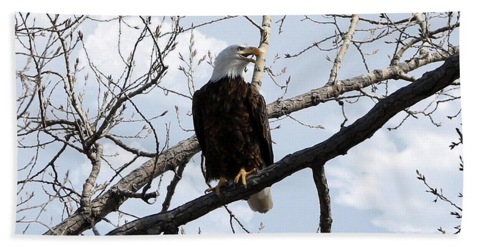 Merlin Hand Towel featuring the photograph Bald Eagle by Lori Tordsen