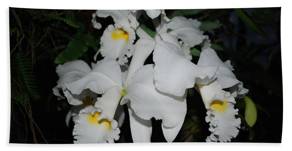 Grown By Me Hand Towel featuring the photograph Orchid by Robert Floyd