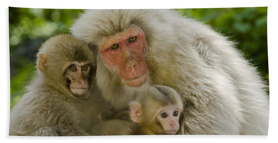 Asia Bath Sheet featuring the photograph Snow Monkeys, Japan by John Shaw