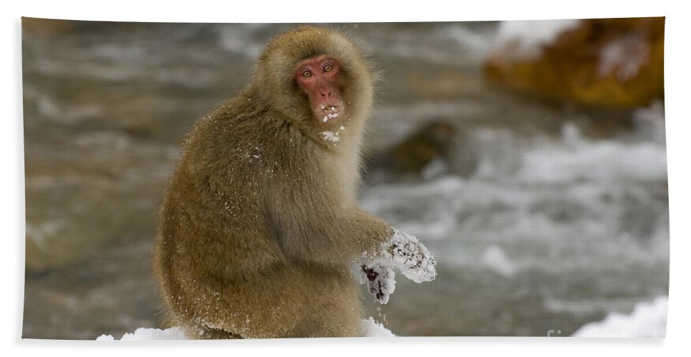 Japanese Macaque Bath Sheet featuring the photograph Japanese Macaque by John Shaw
