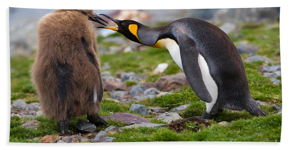 Animal Hand Towel featuring the photograph King Penguin by John Shaw
