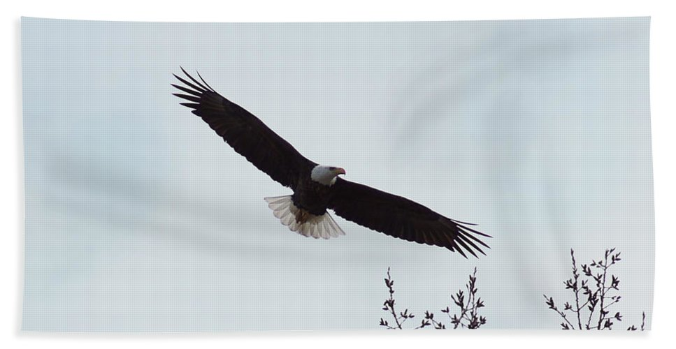 Eagle Hand Towel featuring the photograph Bald Eagle by Lori Tordsen