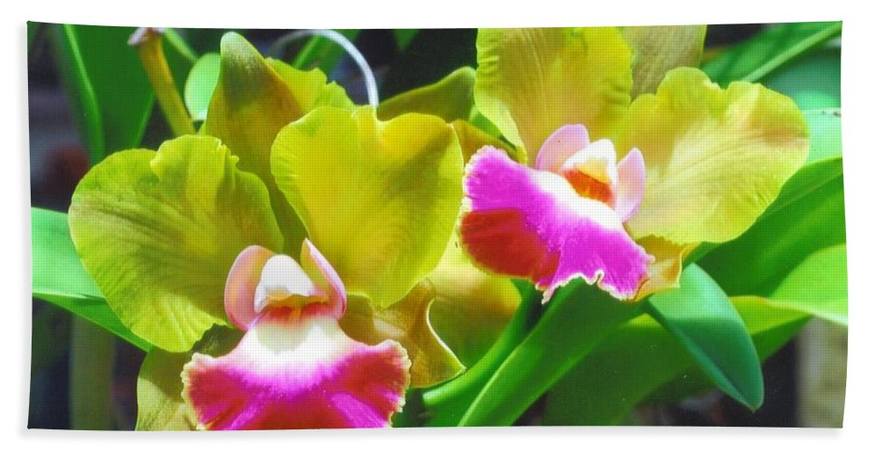 Grown By Me At Home Bath Sheet featuring the photograph Orchid by Robert Floyd