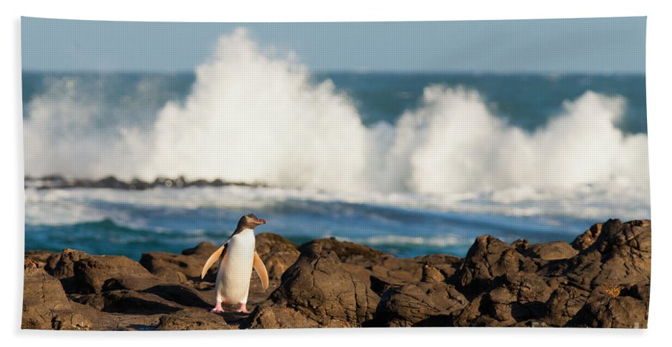 South Island Hand Towel featuring the photograph Adult Nz Yellow-eyed Penguin Or Hoiho On Shore by Stephan Pietzko