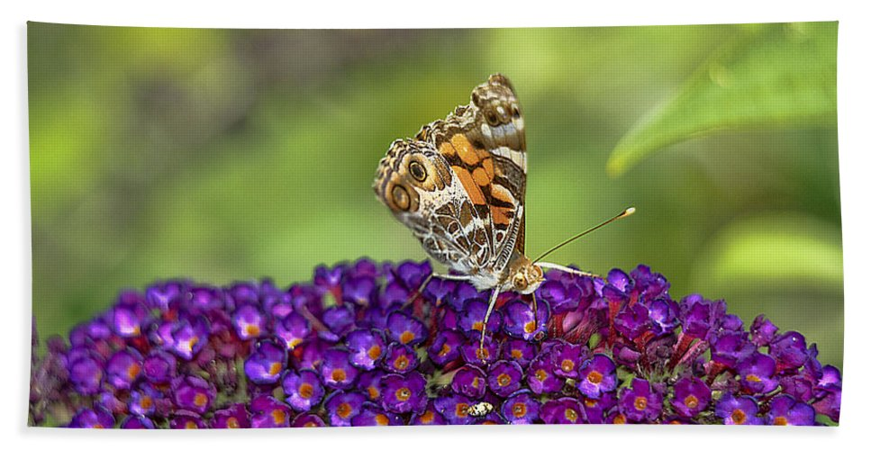 Butterfly Bath Sheet featuring the photograph American Painted Lady by Geraldine Scull