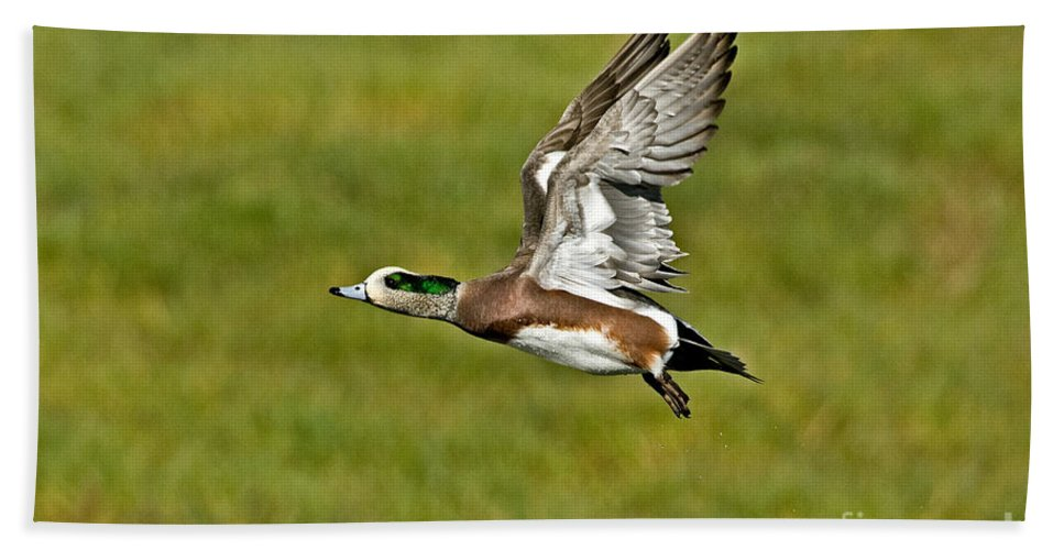 Fauna Hand Towel featuring the photograph American Wigeon Drake by Anthony Mercieca