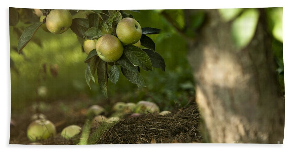 Agricultural Hand Towel featuring the photograph Apple Tree by Dan Radi