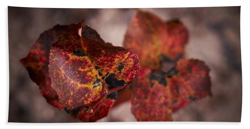 Lehtokukka Bath Sheet featuring the photograph Autumn Colors by Jouko Lehto