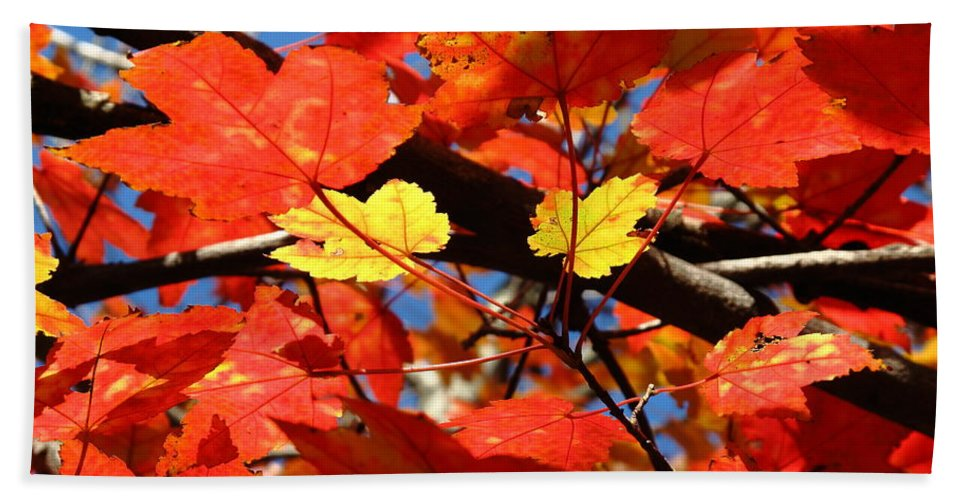 Art Hand Towel featuring the photograph Autumn Leaves by Frank Romeo