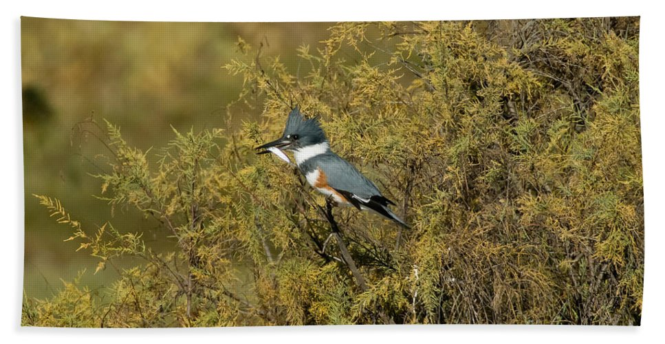 Vertical Hand Towel featuring the photograph Belted Kingfisher With Fish by Anthony Mercieca