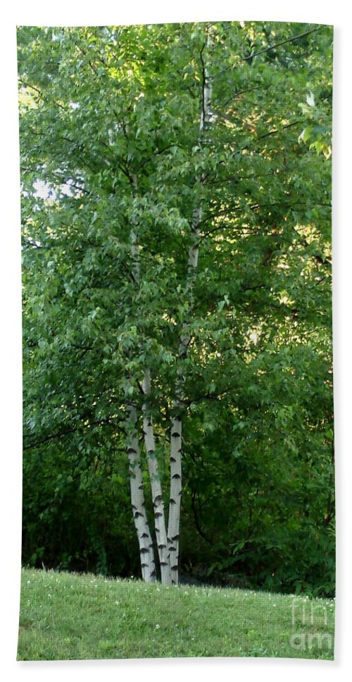 Arbor Bath Sheet featuring the photograph 3 Birch Trees On A Hill by Kerri Mortenson