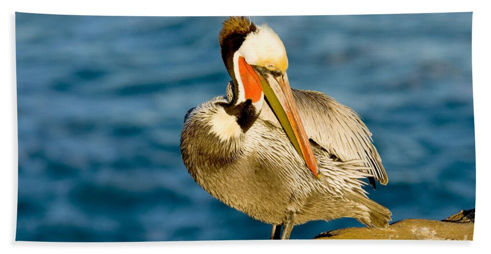 Preen Hand Towel featuring the photograph Brown Pelican Preening by Anthony Mercieca