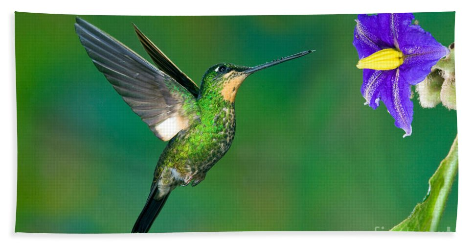 Animal Hand Towel featuring the photograph Buff-winged Starfrontlet by Anthony Mercieca