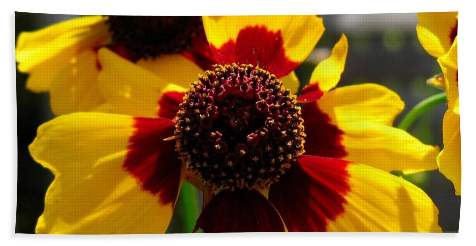 Mccombie Bath Sheet featuring the photograph Coreopsis Or Golden Tickseed by J McCombie