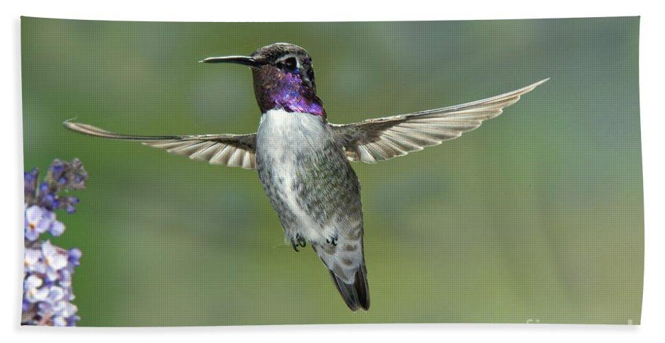 Costa's Hummingbird Hand Towel featuring the photograph Costas Hummingbird by Anthony Mercieca